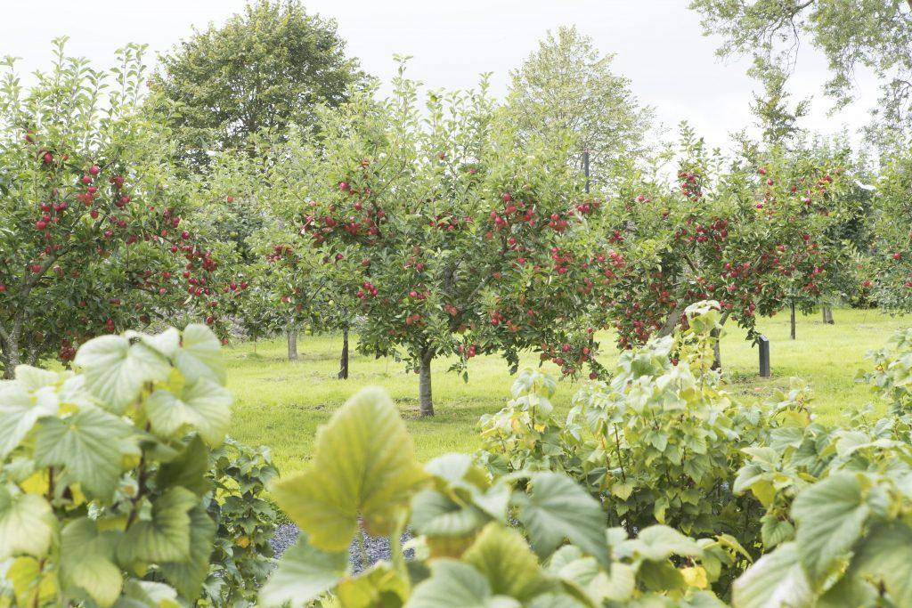 September Harvest at Attyflin Estate